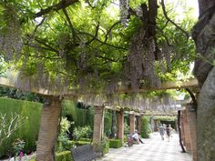 jardin de l'alhambre, andalousie, grenade, espagne 2