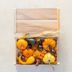 Fall Foliage Pumpkin & Gourd Crate in House + Home Vases + Accents at Terrain