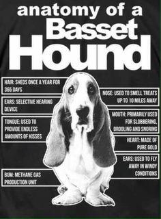 Basset                                                                                                                                                                                 More: