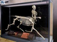 Mythical Creatures Exhibit