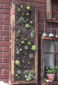 {DIY Vertical Succulent Planter!}