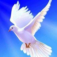 Discernment: Good and Evil Spirits Dove Images, Dove Pictures, Pigeon Pictures, La Passion Du Christ, Papa Juan Pablo Ii, Dove Flying, Saint Gabriel, Pray For Peace, Saint Esprit