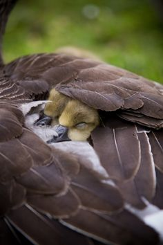 http://postris.com/list/324/20-Cute---Peaceful-Photos-Of-Sleeping-Animals/
