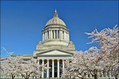 Legislative Building in Olympia, WA. Cherry trees in bloom.