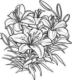Lilies M-105