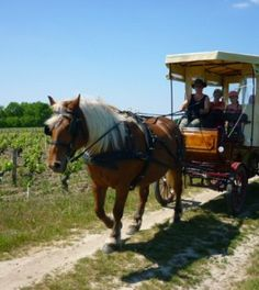 Visite insolite des vignobles de Loire, en calèche http://www.my-loire-valley.com/2013/08/visite-insolite-vignobles-loire-caleche/