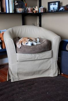My beagle.