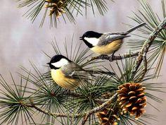 Chickadees & Pine Cones