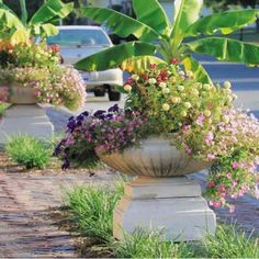 Choices of planters, urns, and window boxes to enhance the outside of your home.