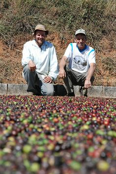 Eduardo and his father with the coffee they will enter in this year's Fair Trade Cupping Competition, Unipcafem, Brazil