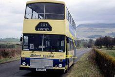 Bluebird Buses, Bus Coach, Busses, Coaches, Blue Bird, Transportation, Classic Cars, Friends, Modern