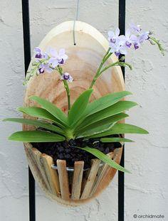 150 Orquideas Orquideas Cultivo De Orquídeas Plantas De Orquideas
