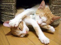 毎日のようにTwitterに掲載される「猫画像」!!私も猫を飼っていますが、様々な場面に遭遇します。面白い瞬間や奇跡的なショットが撮れることもあります。見事シャッターチャンスを物にした素晴らしい一枚を掲載します。個人的に非常に好きなつぶやきをご覧下さい。   織田裕二ばりの「キターーーーーーーーーーー!!」  冬休み突入キター! pic.twitter.com/pKpgcXtX78 — 民生@botじゃないよ手動だよ (@tamio_snow) 2015,