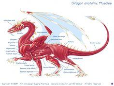 Dragon Anatomy: Muscles * Dragon Fantasy Myth Mythical Mystical Legend Dragons Wings Sword Sorcery Art Magic Drache dragon drago dragon Дракон  drak dragão