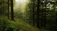 LOVE this rainy forest image by JoannaRB2009, via Flickr
