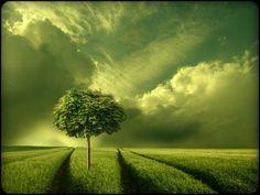 grün,,,, von Veronika Pinke