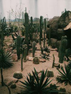 cacti haven.