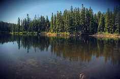 Gifford Pinchot National Forest - Pacific Crest Trail  I WANT TO GO CAMPING