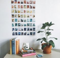 book, plants, and polaroid image