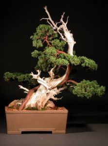 Creating A Tanuki Bonsai : instruction for process. This is a controversial form of bonsai. It incorporates separate deadwood material with a live bonsai. It is kinder to the living tree, yet gives the appearance of deadwood. I happen to love it.
