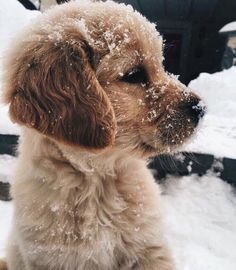 Golden Retriever Puppies Golden Retriever puppy playing in the snow Cute Funny Animals, Cute Baby Animals, Animals In Snow, Fluffy Animals, Happy Animals, Cute Dogs And Puppies, Doggies, Puppies Puppies, Adorable Puppies