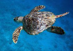 Bonaire diving!