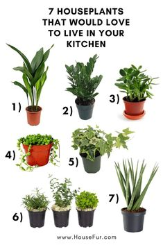 7 Houseplants That Would Love to Live In Your Kitchen