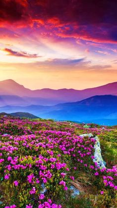 Valley of Flowers National Park is an Indian national park, located in West Himalaya, in the state of Uttarakhand Beautiful Nature Pictures, Amazing Nature, Pretty Pictures, Beautiful Landscapes, Beautiful World, Nature Photos, Beautiful Flowers, Beautiful Gorgeous, Beautiful Scenery