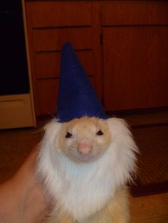 Ok, my ferrets are going to need some costumes after seeing this... OMG for cute!
