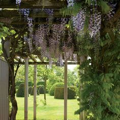 A pergola is festooned with wisteria on the grounds of a Belgian estate, which were created by renowned landscape-design firm Wirtz International.  Pin it.