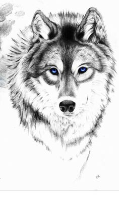 Wolf drawing                                                                                                                                                                                 More