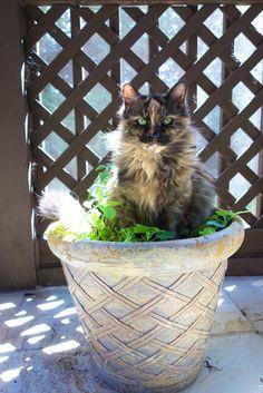 Meow Monday   Plain Chicken
