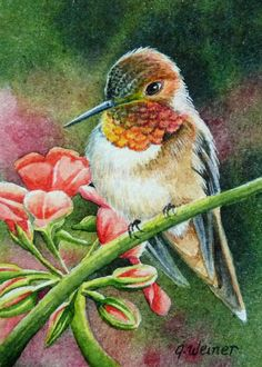 Jean M Weiner ~ Rufous Hummingbird~ Giclee Fine Art Limited Edition Print from Original Watercolor Birds Painting, Art Painting, Animal Art, Watercolor Animals, Nature Art, Art, Hummingbird Art, Watercolor Bird, Bird Art