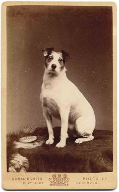 biscuit by Libby Hall Dog Photo, via Flickr