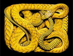 National Geographic Snake Photography