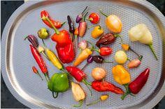 Istutusten ja nurmikon rajaus - Kotipuutarha Chile, Stuffed Peppers, Vegetables, Food, Green, Stuffed Pepper, Essen, Vegetable Recipes, Meals
