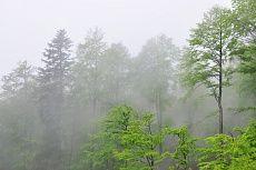 Schichten im Nebel von Dagmar Schneider