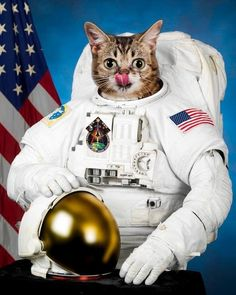 Lil Bub wearing a spacesuit.