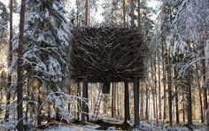Nesting with the birds  In the forest canopy  Where tree lovers flock