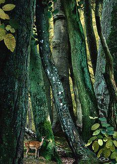 Ruud van Empel, study in green #9