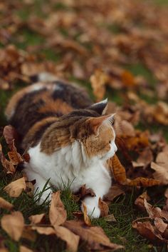 """autumn-whimsy: """"Playing in the leaves by Pamela Greer on Flickr. """" """"sweater weather"""""""