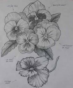 pansies .. sketch .. idea ..