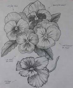 pansies .. sketch .. idea ..