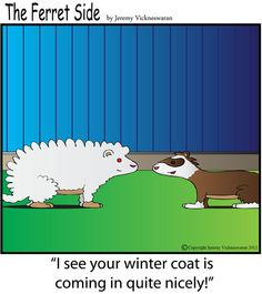 ferret side cartoon: i see your winter coat is coming in quite nicely.