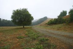 Visit the oak-studded Briones Regional Park in the fall for a spectacular display of orange and gold