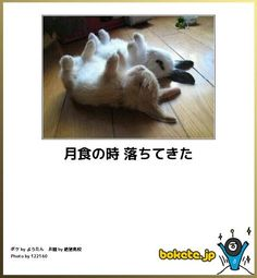 か、、可愛い!! Funny Photos, Funny Images, Animals And Pets, Cute Animals, Funny Comments, Illustrations And Posters, Cute Kids, Kittens, Kawaii