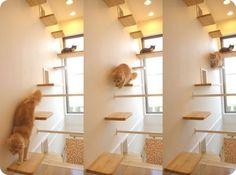 casa para gatos japon