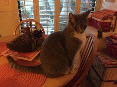 lizardmarsh: L.A., CA: Desperate! 2 Abandoned Cats Need FOSTER/...