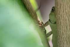 Chameleon Indian by Vijay Panchal on 500px