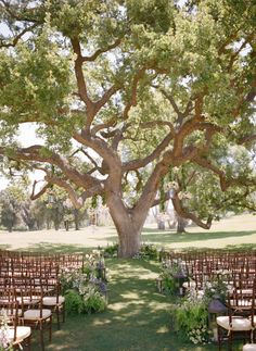 outdoor ceremony in front of a huge tree with gorgeous fern decor